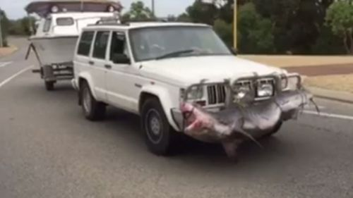 The white Jeep with a shark attached to its bullbar was filmed in Perth. (Facebook/Julie Wright)
