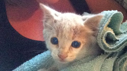 The kitten is now being cared for by Animal Rescue. (Reddit)
