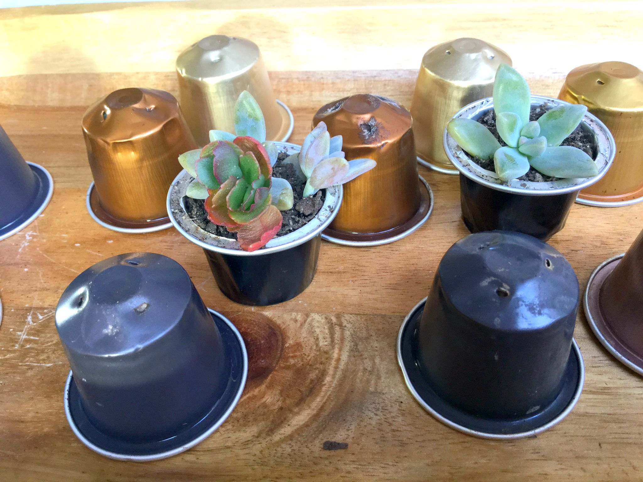 Recycled coffee-pod playground for fairy gardens