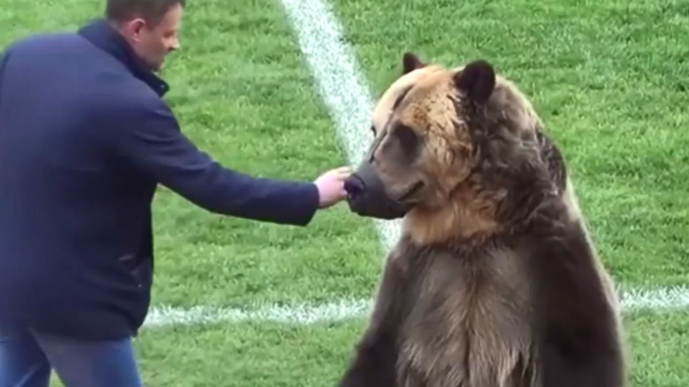 Animal rights groups slam use of Bear at Russian football match