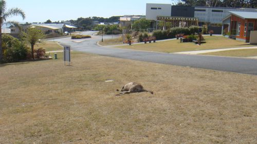 One of the kangaroos killed earlier this year.