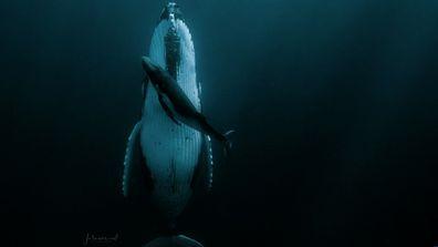 Jasmine Carey: Humpback whale photo sees photographer walk away with HIPA grand prize