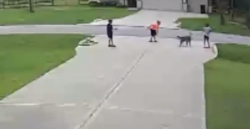 A Texan man has been praised for rescuing his six-year-old neighbour from a vicious dog attack at the weekend.