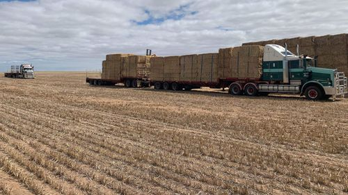 Drought Australia NSW Coonabarabran assistance handouts Rural Aid