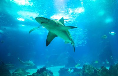 1. Shark tank internally in the property