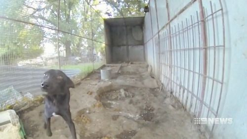 The government is also targeting dogs brought in from other states. (9NEWS)