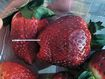 How the strawberry contamination crisis unfolded