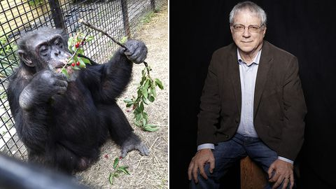 A lawyer in the US is fighting to have two chimps freed from captivity by having them recognised as people. (AAP)