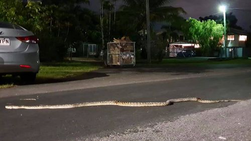 Suspected scrub-python sprawled across street catches suburb off guard