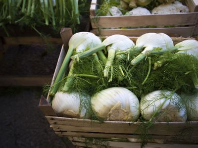 <strong>Fennel</strong>