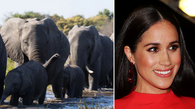 The Duchess of Sussex has narrated a documentary called Elephant for Disney Nature.