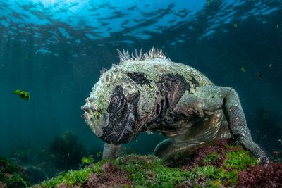 Aquatic Life winner