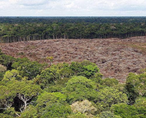 Deforestation in the Brazilian Amazon reached 2,254.8 square kilometers in July 2019, an area 278 percent larger compared to the same month last year, according to the National Institute of Space Research (INPE).