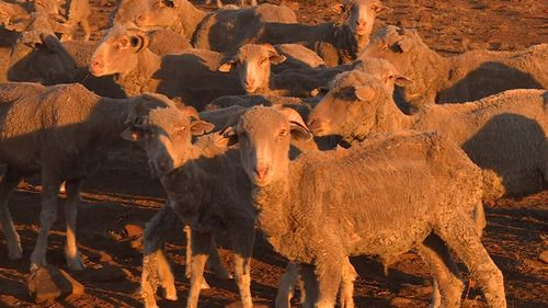 The drought is one of the worst the country has seen. Image: 9News