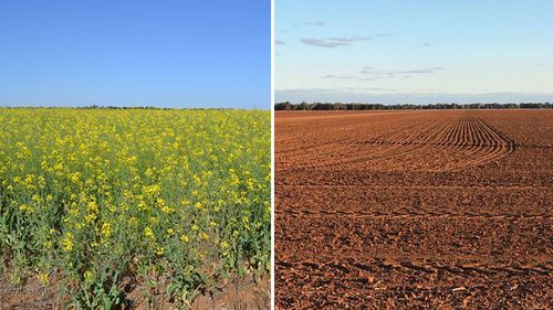 Current NSW drought conditions, right, and the same acreage blooming in 2009.