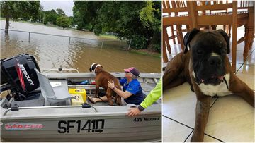 Wounded dog's incredible rescue from floodwaters