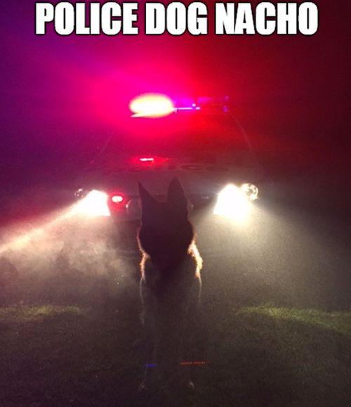 Police dog Nacho saves the day by helping WA police arrest man