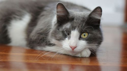 Marcello has since made a full recovery and looking for somewhere new and quiet to live. Picture: RSPCA.