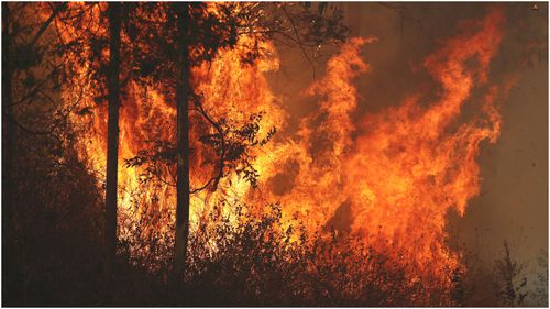Police are now investigating if the fires burning in northern NSW and Queensland were deliberately lit.