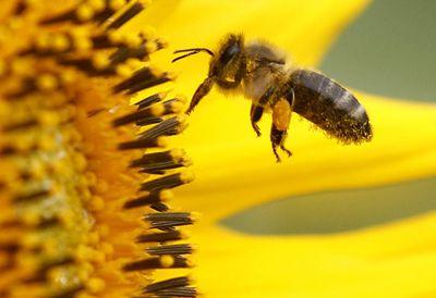 3. Bee pollen
