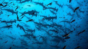 2021 Ocean Photography Awards finalists