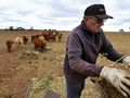 Drought could cost economy up to $12 billion