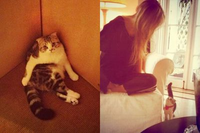 Taylor named her Scottish Fold kitty Meredith after her fave <i>Grey's Anatomy</i> character.