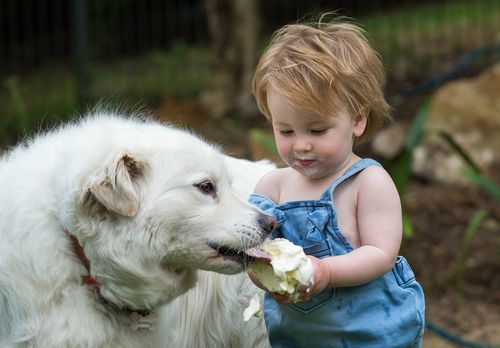 Hudson Walsh, 14 months, shares an ice cream with his dog Sammy in Adelaide. (AAP)