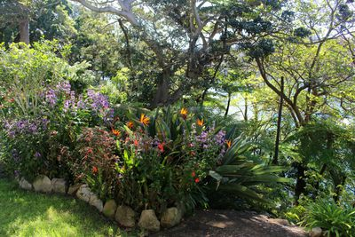 <strong>Lex and Ruby's Garden, Cremorne Point</strong>