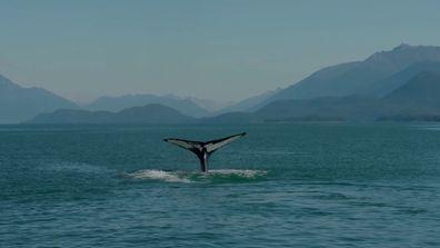Whale Spotting in Juneau, Alaska