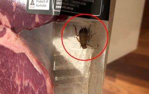 Woman 'horrified' after cockroach crawls out of Aldi steak