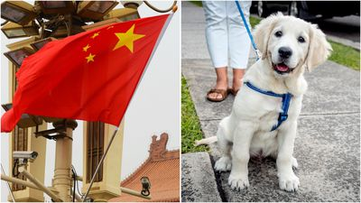 Chinese city bans dogs from daytime walks