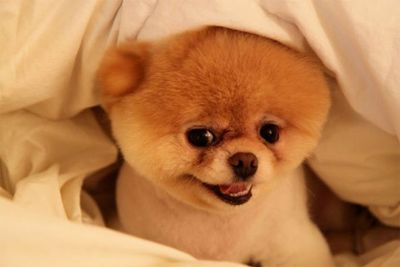 "Dogs can be internet stars too!<br/><br/>Boo, ""the world's cutest dog"", has 5.3 million followers on facebook and he even has his own coffee table book!"