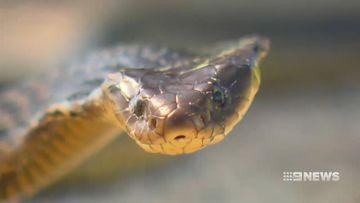 Snake bites on the rise across Western Australia