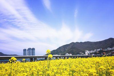 <strong>10. Busan, South Korea</strong>
