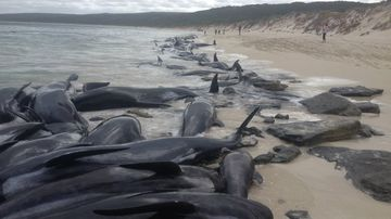 Shark danger warnings as whales litter beach