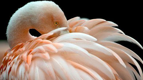 Flamingo killer strikes German zoo