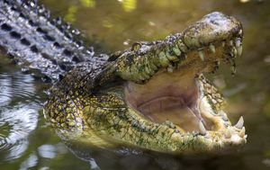 Indian girl killed by crocodile while washing dishes on riverbank