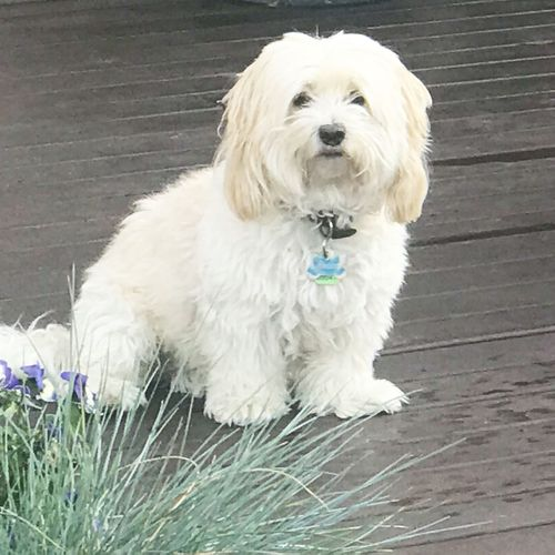 Teddy, an eight-year-old crossbreed poodle, was killed in the attack.