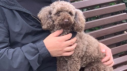 Zico and his owner were attacked while on a walk on Friday night.