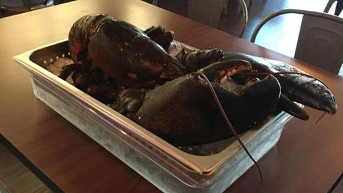 Century-old giant lobster rescued from becoming a meal