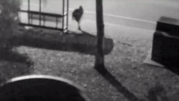 The woman's attempted attack was captured on CCTV, showing the man stumble and run after she fought him off.