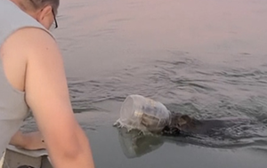 US family saves young bear swimming with head stuck in bin