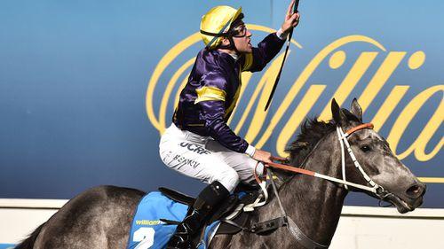 Jockey injured, horse dead after fall at Randwick