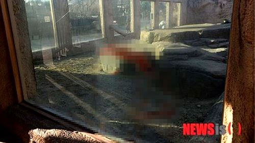 Animal keeper mauled to death by two lions in Korean zoo