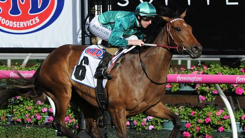 Humidor is second favourite for the Melbourne Cup.
