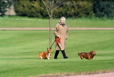The Queen with her corgies at Windsor Castle in 1994.
