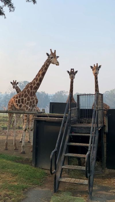 Up close and personal with Mogo Wildlife Park residents