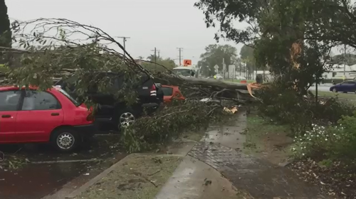 The storm brought a tree down on top of parked cars in Beaudesert.