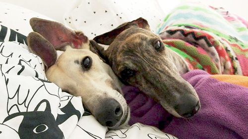 Meet the rescue dogs helping to give their owners a new lease on life